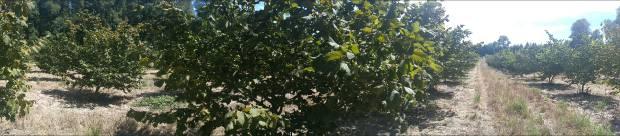Huiscapi, Loncoche